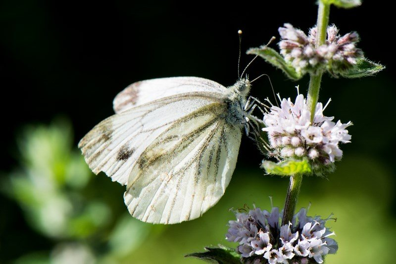 Action « biodiversité chez moi »