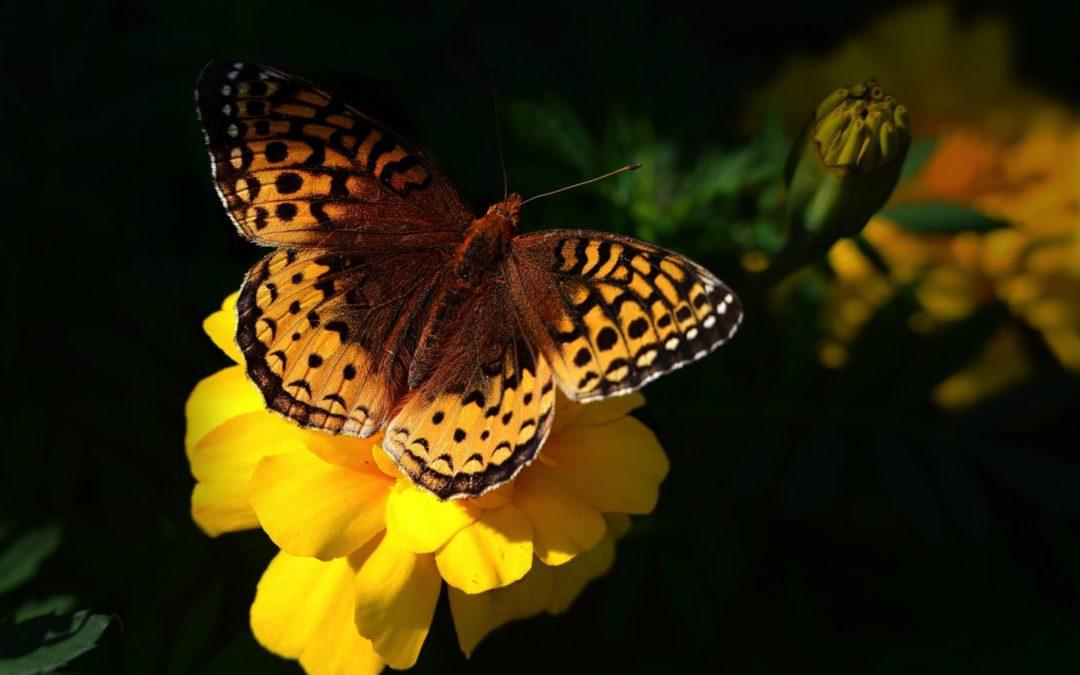 Union Wallone des Entreprises : concours photo – «La biodiversité dans mon entreprise»